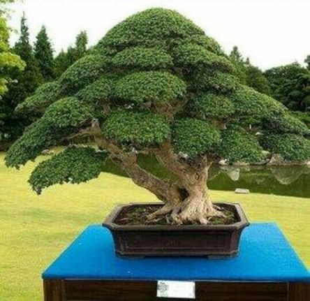 Creative Bonsai Trees Gardening Ideas For Backyard 44