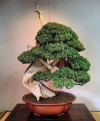 Creative Bonsai Trees Gardening Ideas For Backyard 49