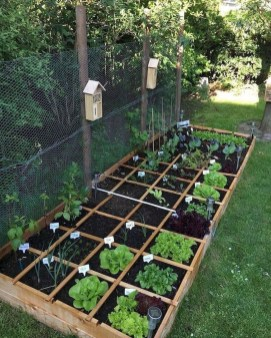 Best Ideas To Growing Vegetable Garden 04