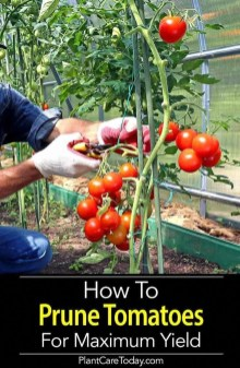 Best Ideas To Growing Vegetable Garden 21
