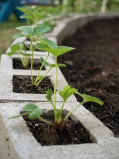 Fancy Garden Bed Borders Ideas For Vegetable And Flower 01