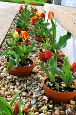 Fancy Garden Bed Borders Ideas For Vegetable And Flower 34