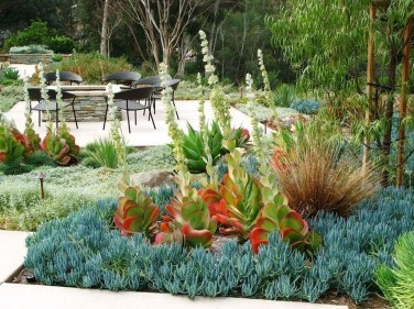Awesome Succulent Garden Ideas In Your Backyard 01