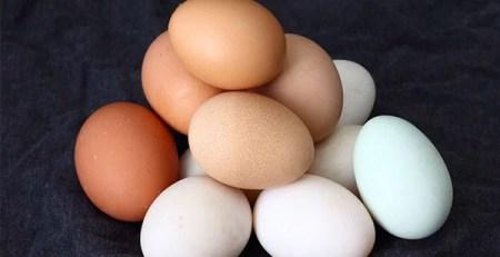 uova diverso colore