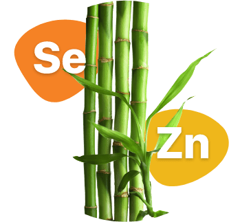 Ingredienti Nurvast Hair - Bamboo, Selenio, ZInco