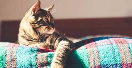 gatto sul letto casa