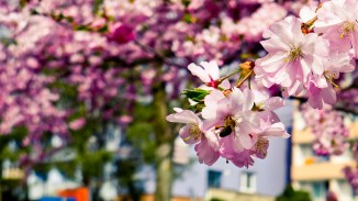 Brno-Spring-014