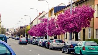 Brno-Spring-044