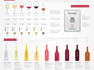 Basic Wine 101 Guide