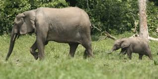 ELEPHANTCELEBRATION
