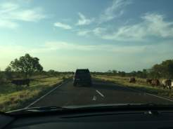 following-miss-chardy-along-the-barkly-highway