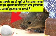 How To Get Rid of Rats – Keep Rats Away