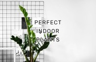 7 EASY Steps To Find Your Perfect Indoor Plants