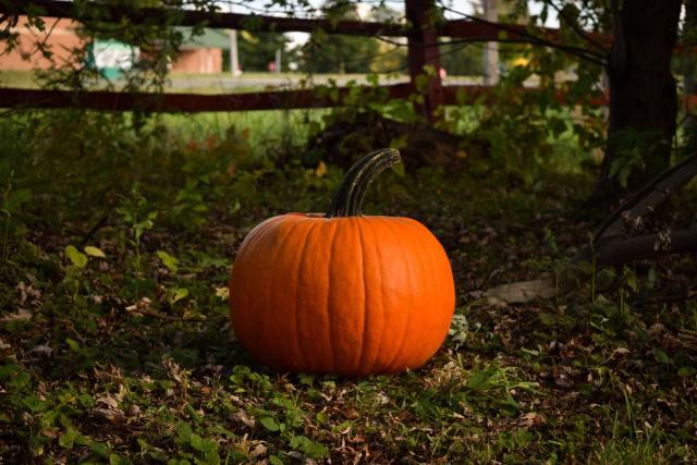 pumpkin near tree