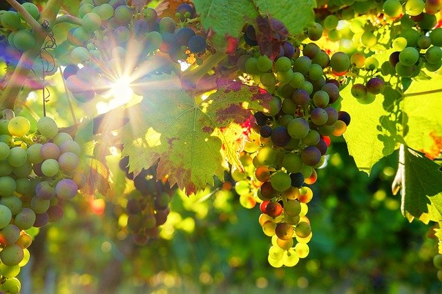 your tips about wine can be found down below - Your Tips About Wine Can Be Found Down Below