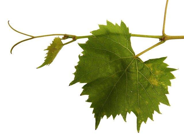 tasty wine advice for tastier wine choices - Tasty Wine Advice For Tastier Wine Choices