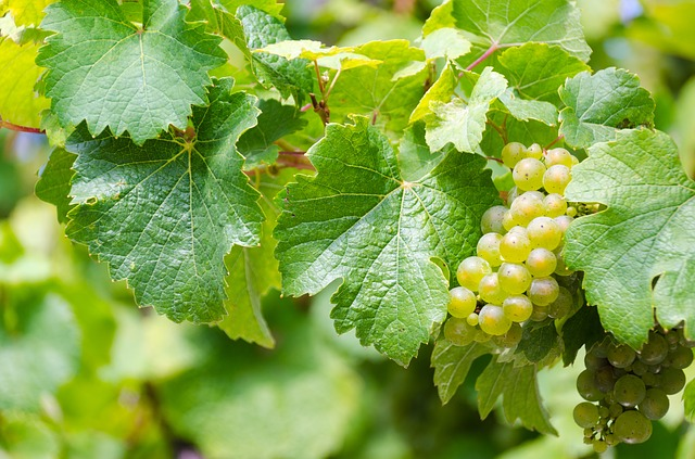 fermentation wine tips to get more out of it - Fermentation: Wine Tips To Get More Out Of It