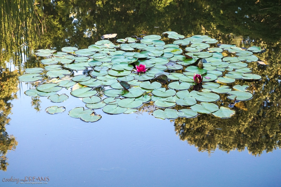 lake with waterlilies and reflection