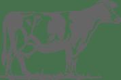 Meat en francais cow illustrated image.