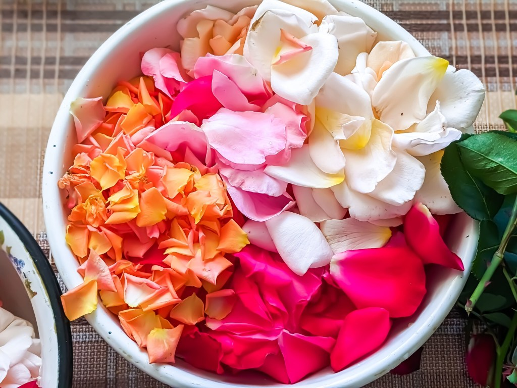a bucket of freshly picked colorful rose petals