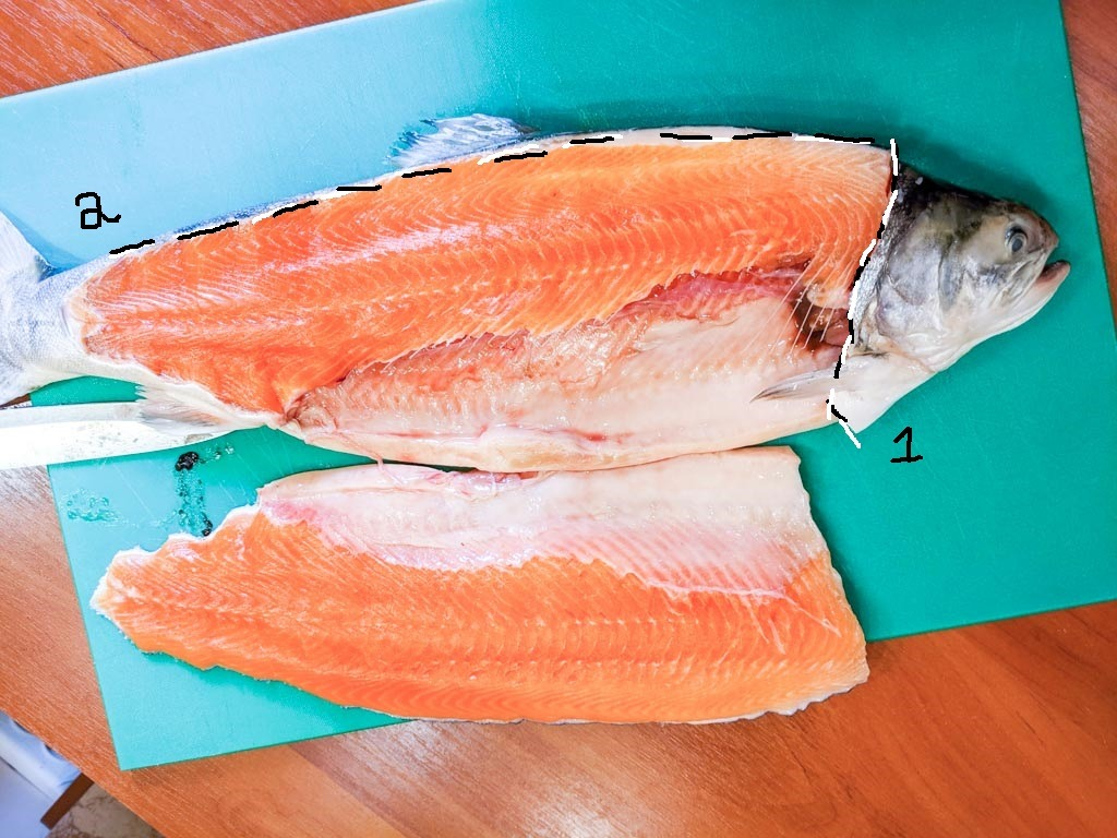 cut lines on the arctic char fish