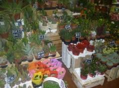 Cactus in Ventimiglia Mercato Dei Fiori in Italy