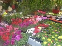 Flowers Market Ventimiglia Italy