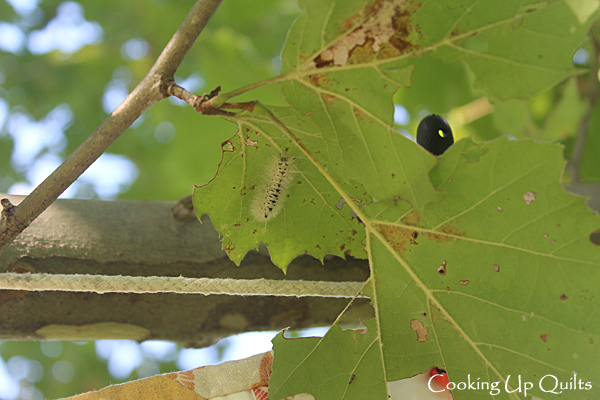 worm in tree