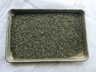 "French green ""de Puy"" lentils"