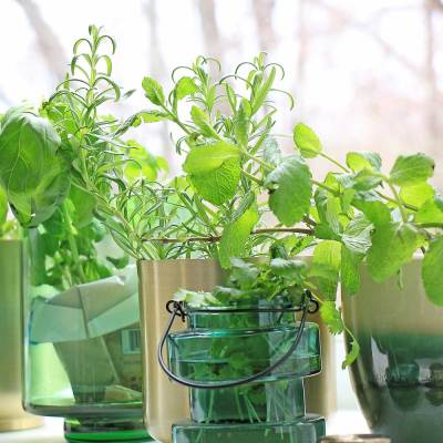 Growing Herbs & Microgreens Indoor