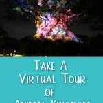 Take a Virtual Tour of Animal Kingdom