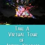 Take a Virtual Tour of Animal Kingdom
