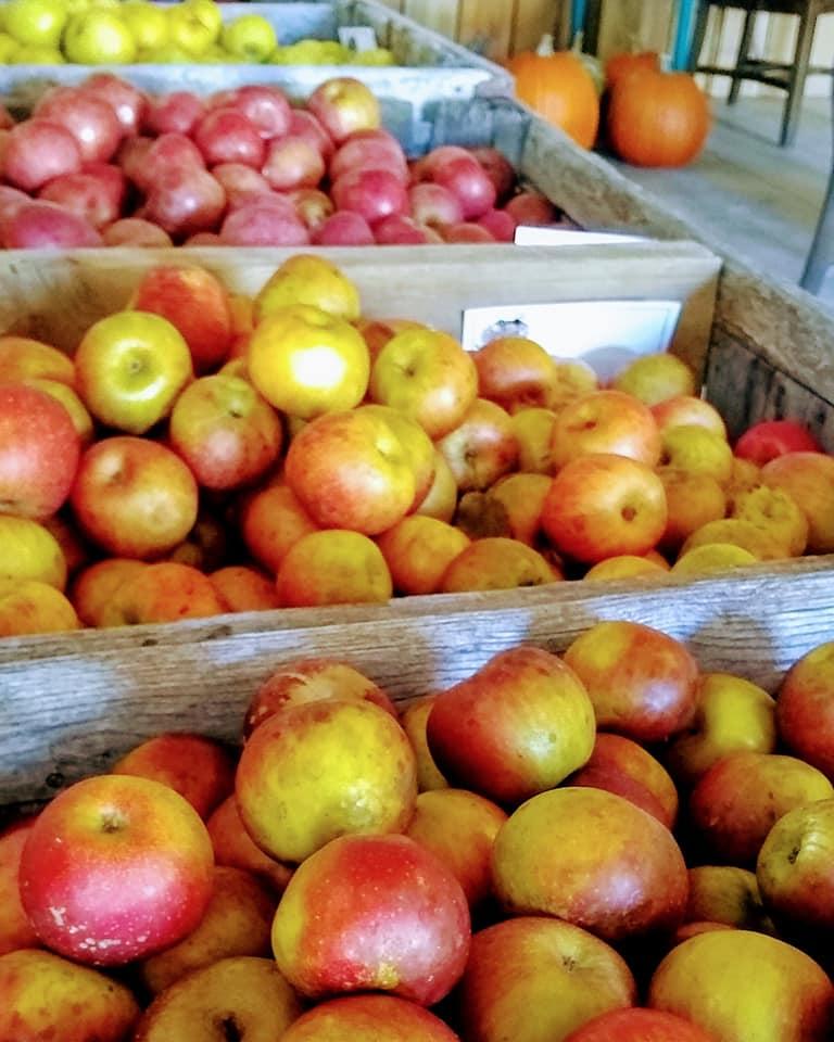 Apples in Bins at Chapel Creek Farms