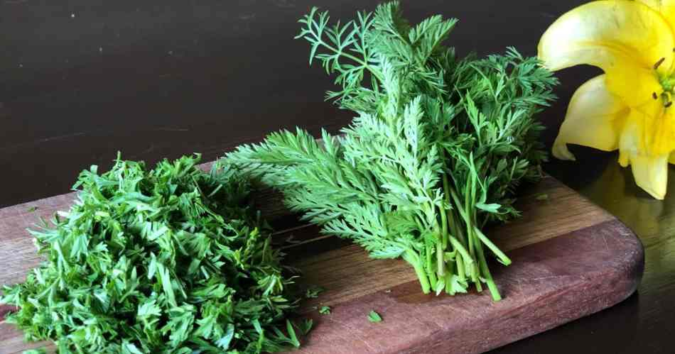 Carrot Tops for Miso Condiment •Cook Love Heal by Rachel Zierzow