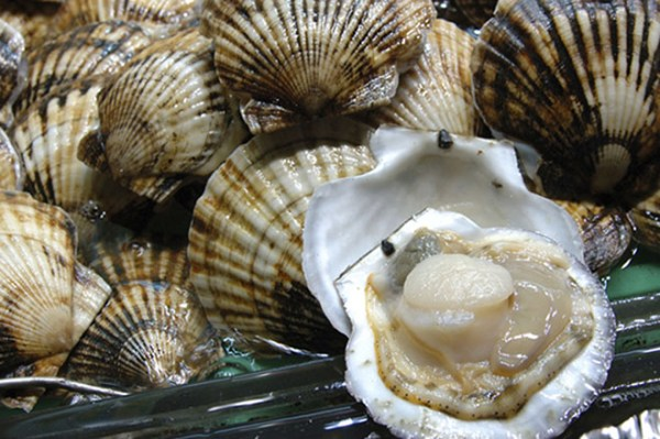 What Do Scallops Taste Like: All You Need To Know ...