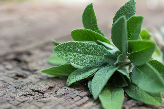 thyme substitute - Sage
