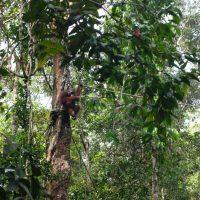 Sarawak - island of Borneo