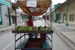 Cuba avocados