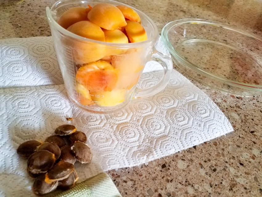 apricot halves in a measuring cup sitting next to an empty pie plate and the apricot seeds