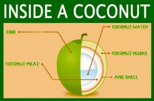 Inside a Coconut