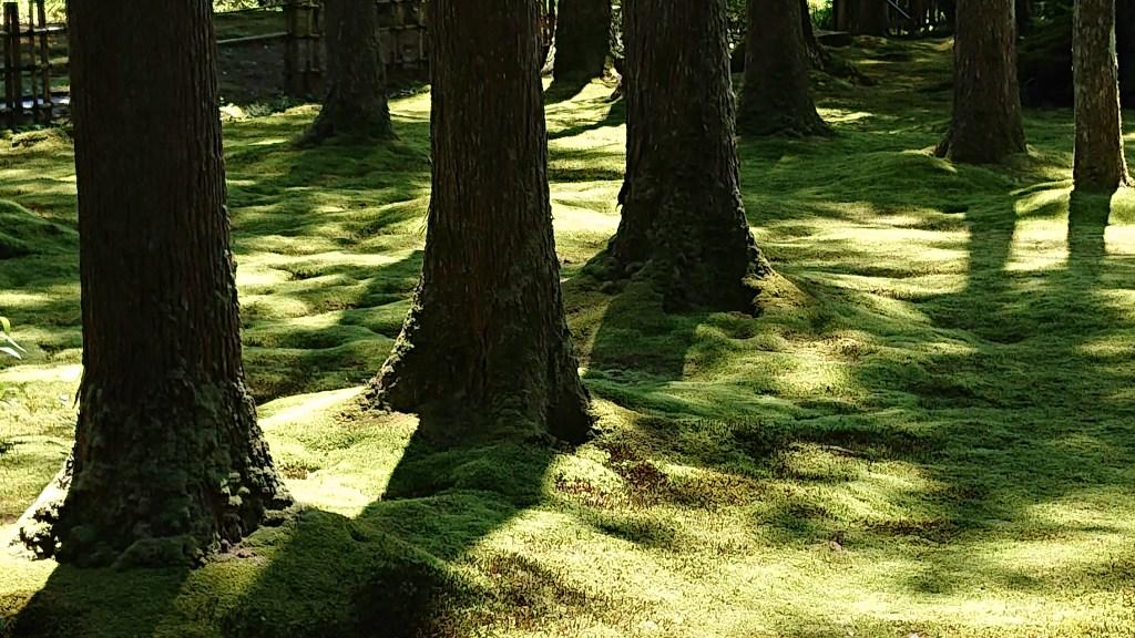 間伐林の苔