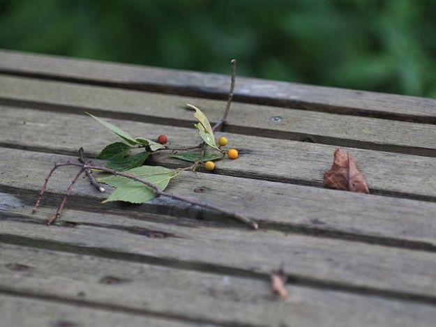 P1230972木のベンチにエノキの実-s