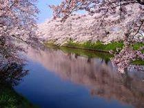 関東で人気の桜の名所ってどこなの?
