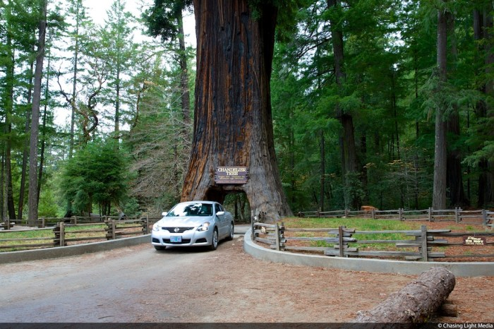 Drive Thru Tree, Mendocino County