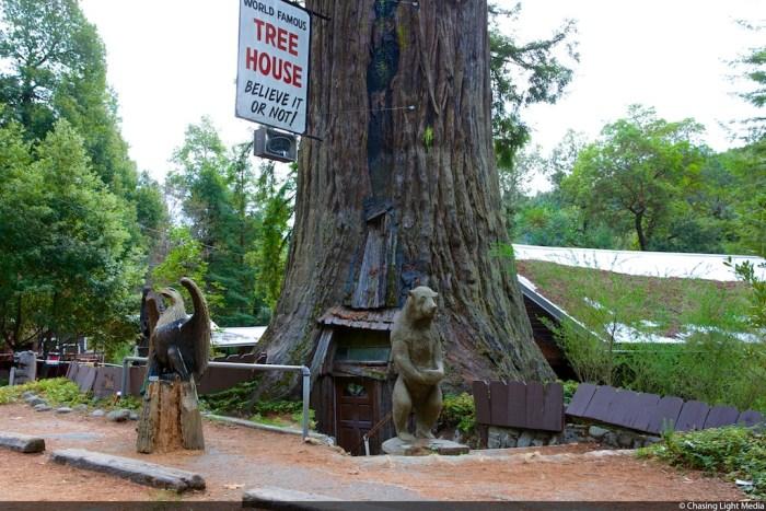 Tree House, Mendocino County