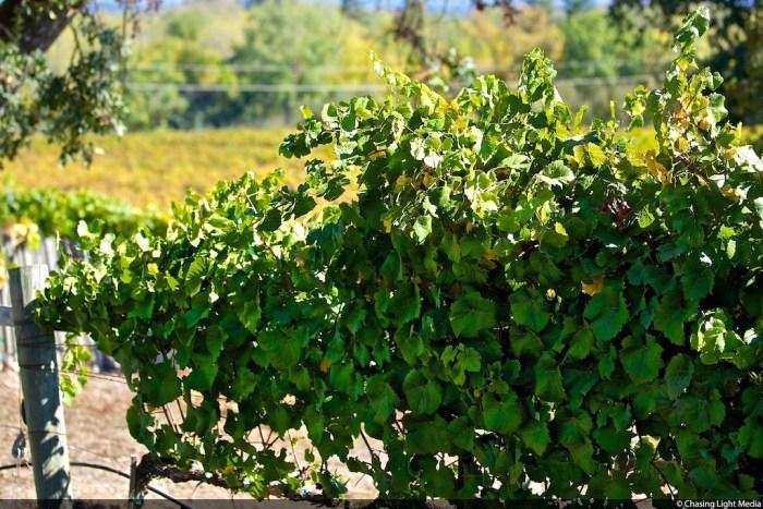 Rochioli Vineyards & Winery