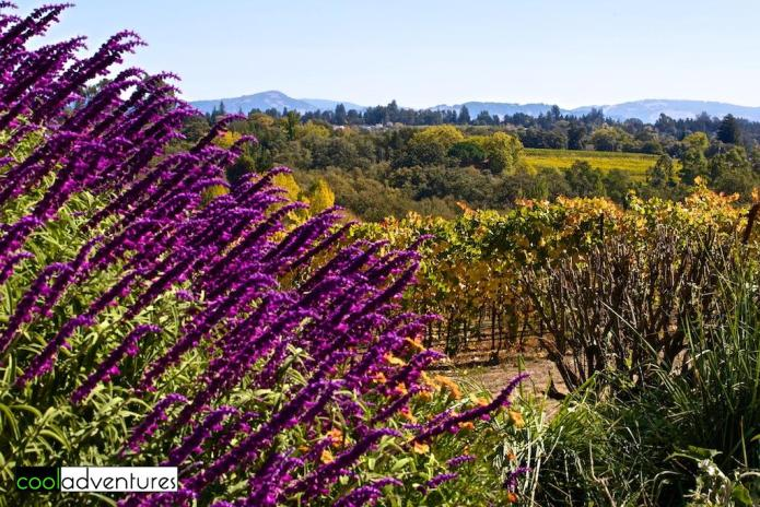 Iron Horse Ranch and Vineyards, Sonoma County, California