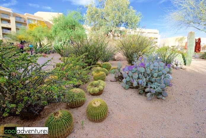 Desert botanical garden, JW Marriott Phoenix , Arizona