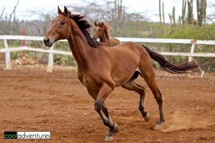 Blaze's Joseph, Rancho Washikemba, Bonaire