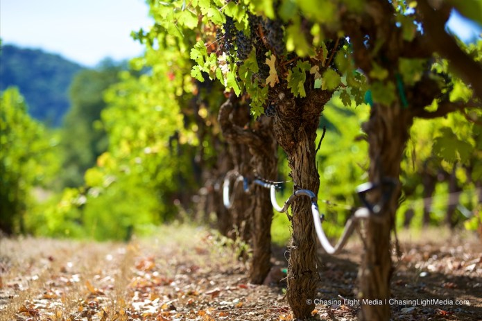Amgen Tour of California 2016 Stage 7: Sonoma County